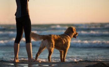 Kvinne med hund på stranda